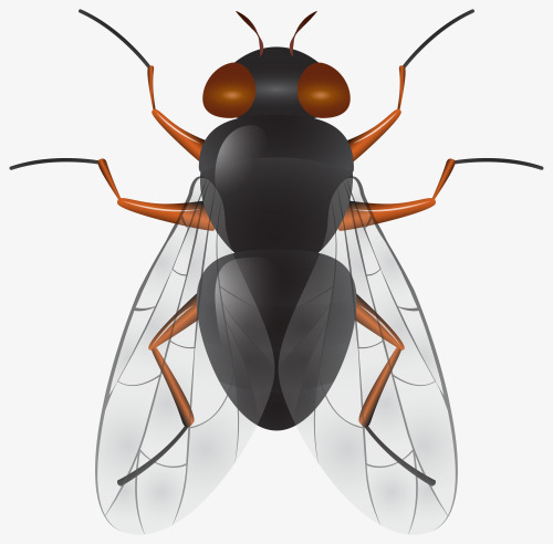 Flies clipart transparent. Wings of wing fly
