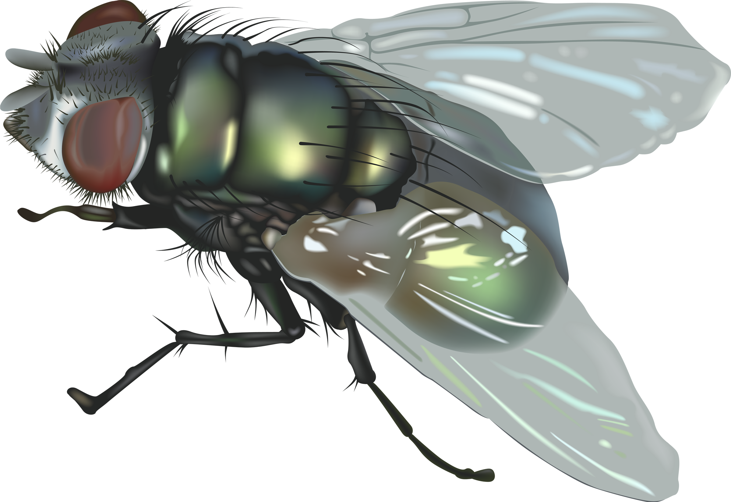 fly flying png