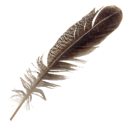Floating feathers png. Feather official the forest