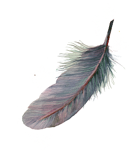 Floating feathers png. Free black vector psd