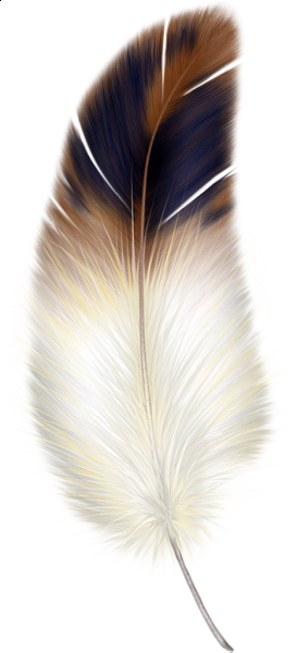 Floating feathers png. Brown y la pluma
