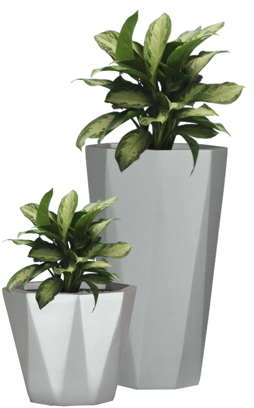 indoor plant png