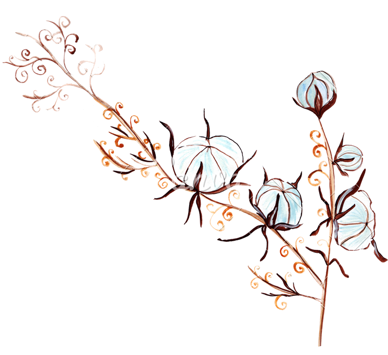 Floral clipart hand drawn. Drawing flowers and cotton