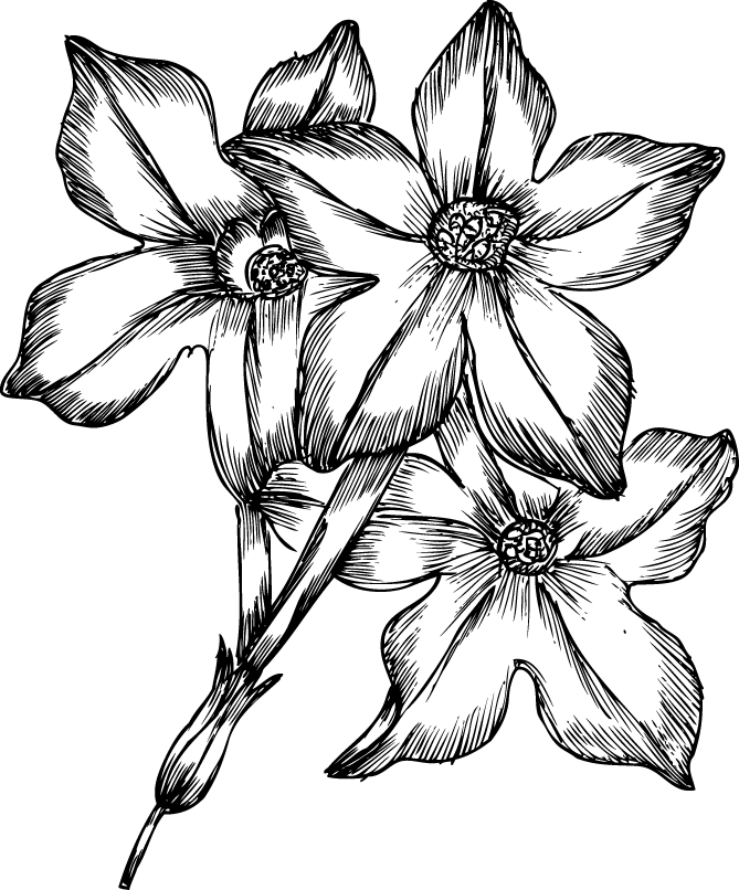 Drawn flowers png. Hand brushes psd clipart