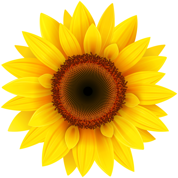 sunflowers png pdf