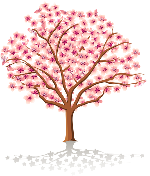 Pretty clipart cherry blossom tree. Download watercolor floral transparent