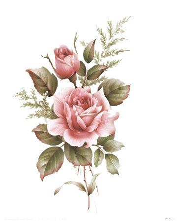pink drawing rose