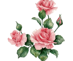 Roses png tumblr. Images about overlay