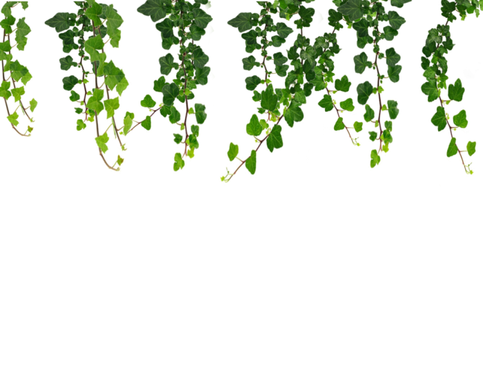 Floral vines png. Vector clipart psd peoplepng