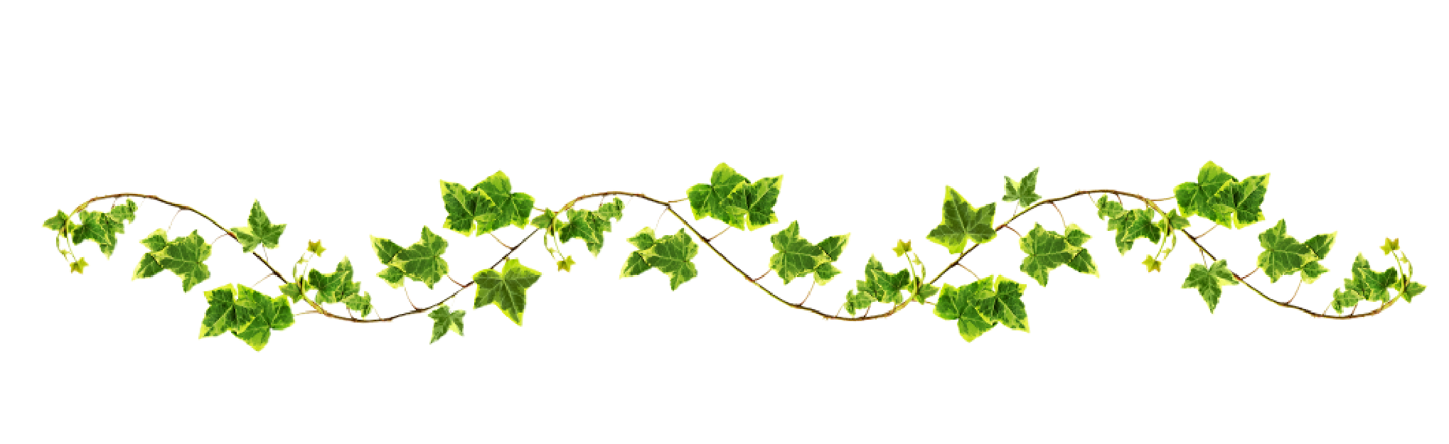 Floral vines png. Vine with maple like