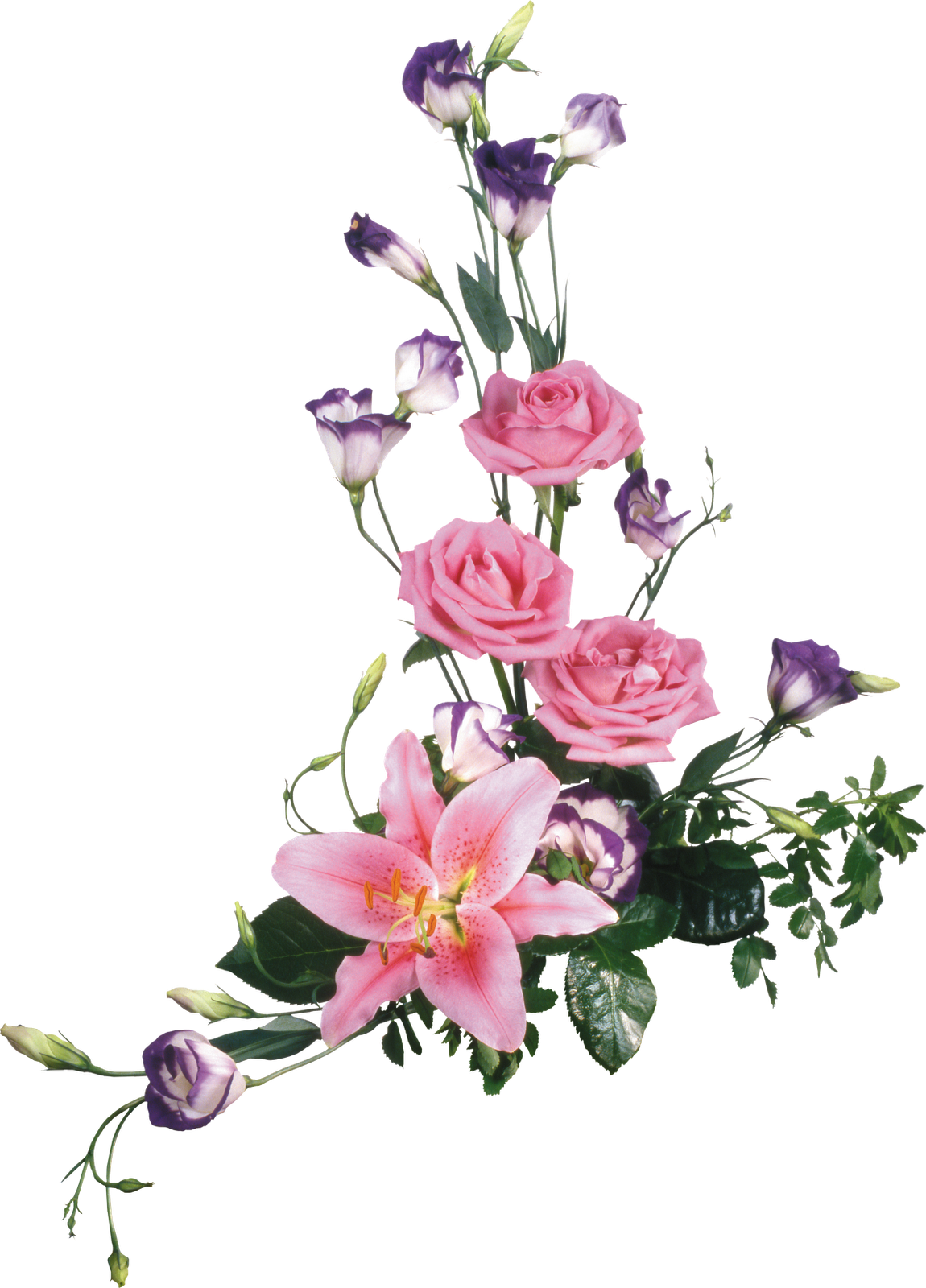 flores formato png