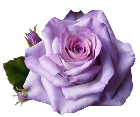 Flores lilas png. Https twitter com you
