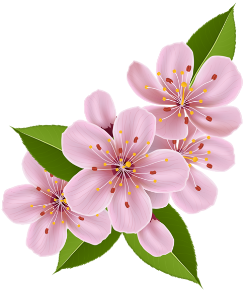 Flores em png. Images in collection page