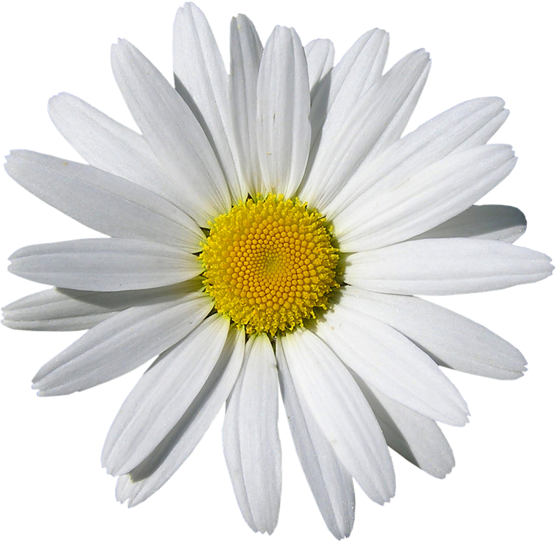 Flores png para photoscape. Flower headband image related