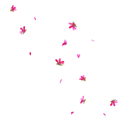 Flores png tumblr. S solo para chicas