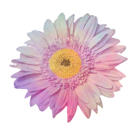 Flower pink stickers sticker. Flores tumblr png svg free