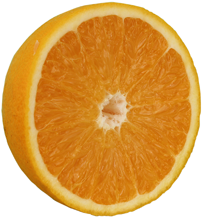 Florida orange png. Buy valencia trees for