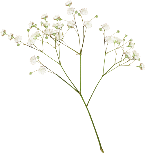 Flower aesthetic png. Plants white editpng