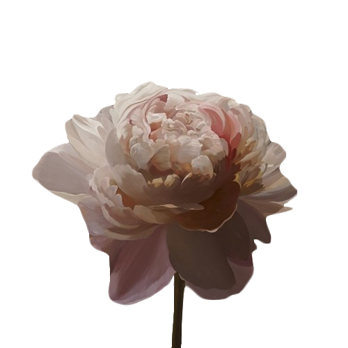 Flower aesthetic png. Transparent source ghostlywatcher sourceghostlywatcher