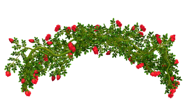 Flower arch png. Vine clipart picture decorative