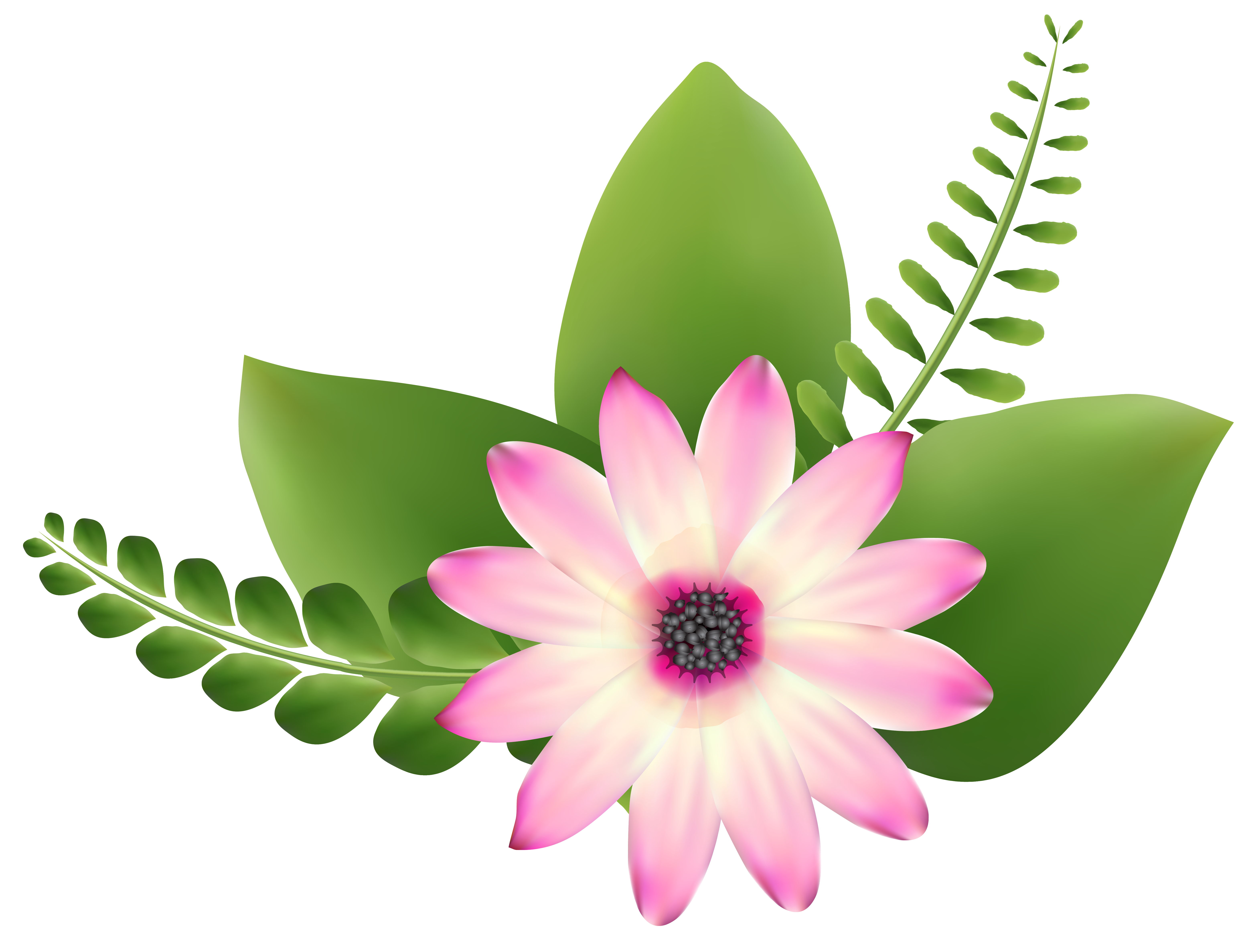 Flower art png. Pink clip image gallery