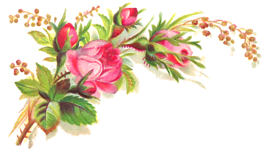 Flower background png. Image pink roses flowers