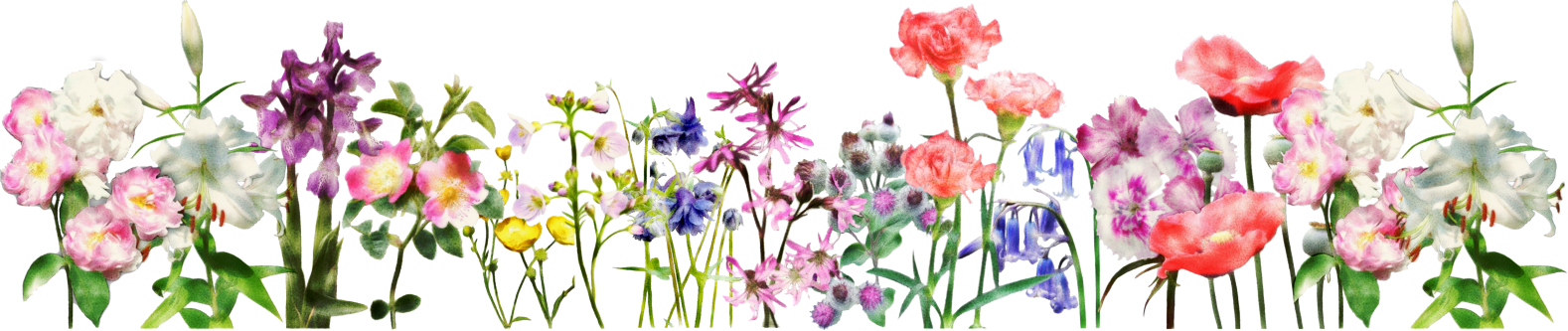 Flower banner png. Flowers for a beautiful