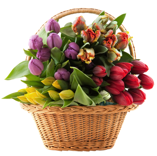 Flower basket png. Transparent with tulips clipart