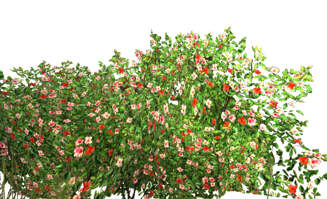 Flower bed png. Bushes transparent pictures free