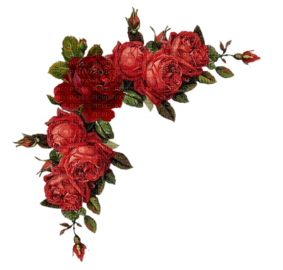 Red rose border png. Borders and frames flowers