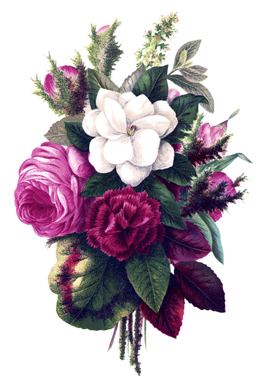 Flower bouquet drawing png. Free clipart pink flowers