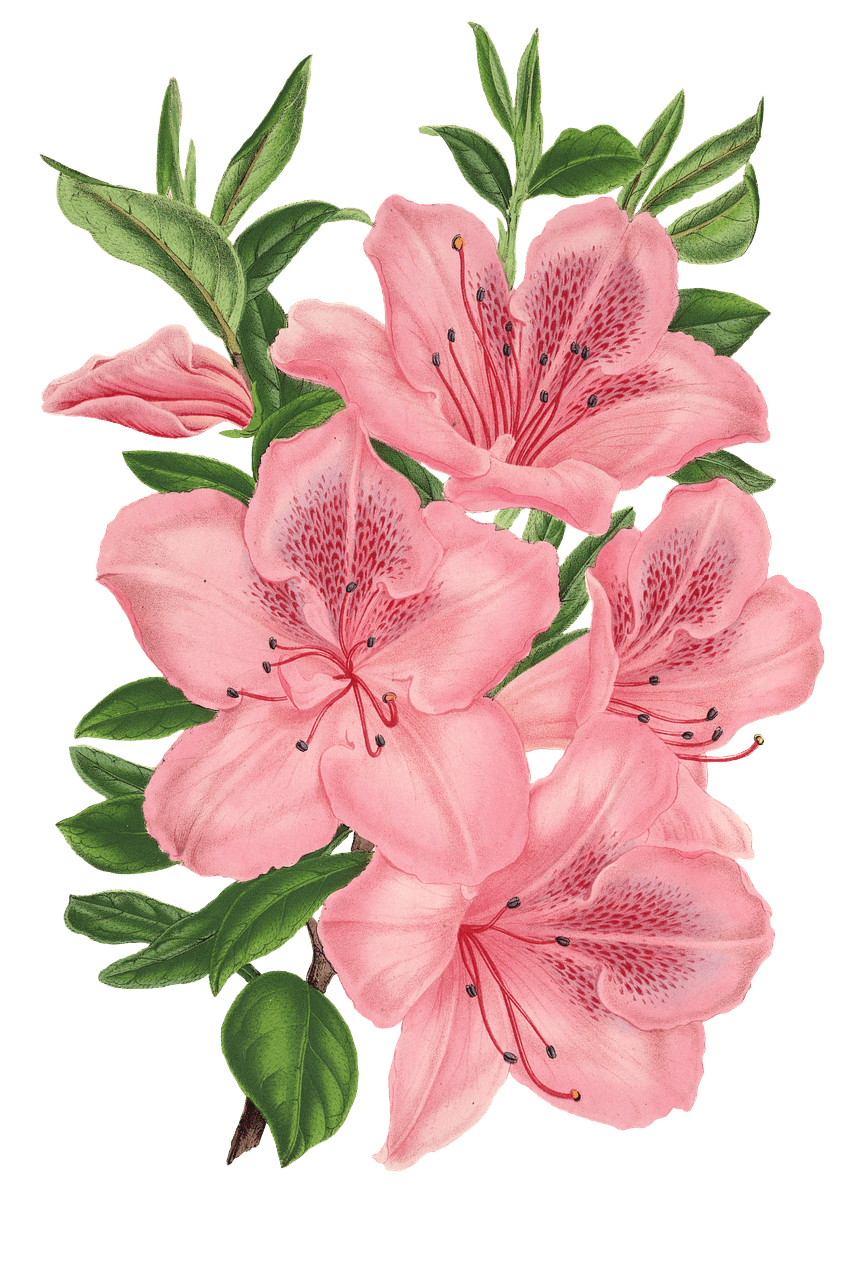 Flower drawing png. Pink bunch of flowers