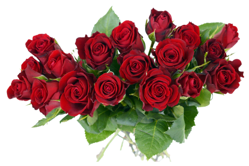 Flower bouquet transparent png. Rose image pngpix