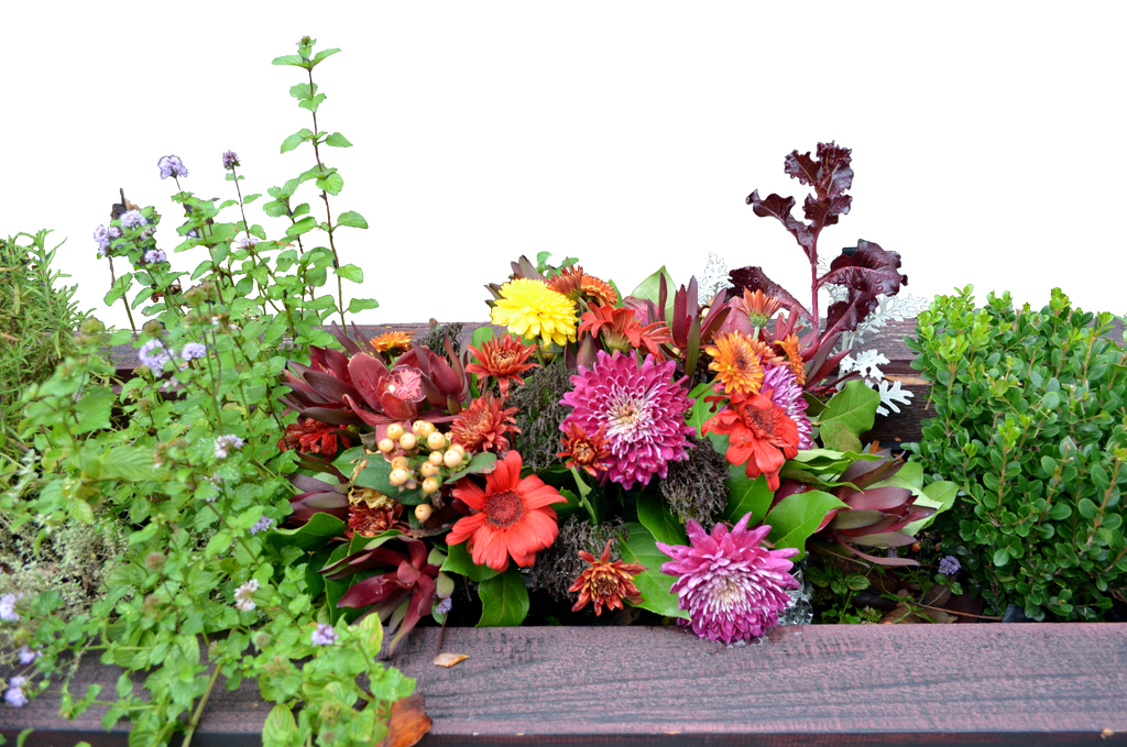Flower box png. Stock photo cutout by