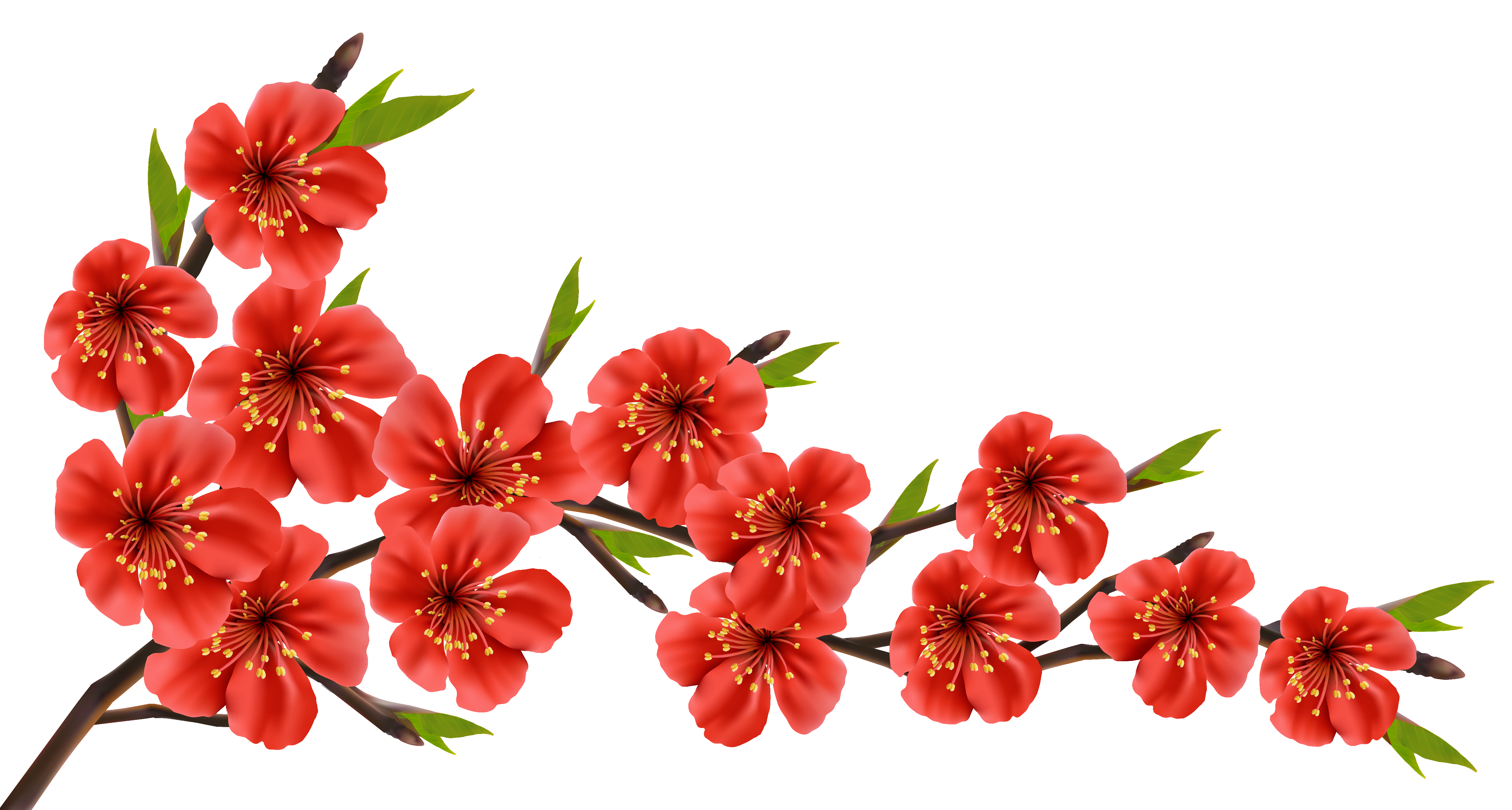 Flower branch png. Red spring clipart image