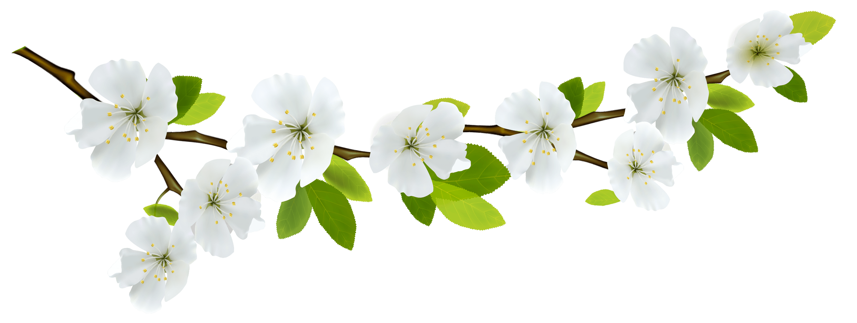 Flower branch png. And flowers transparent stickpng