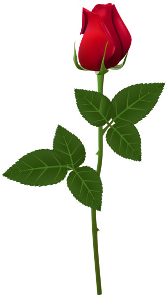 Bud drawing long stem rose. Png transparent clip art