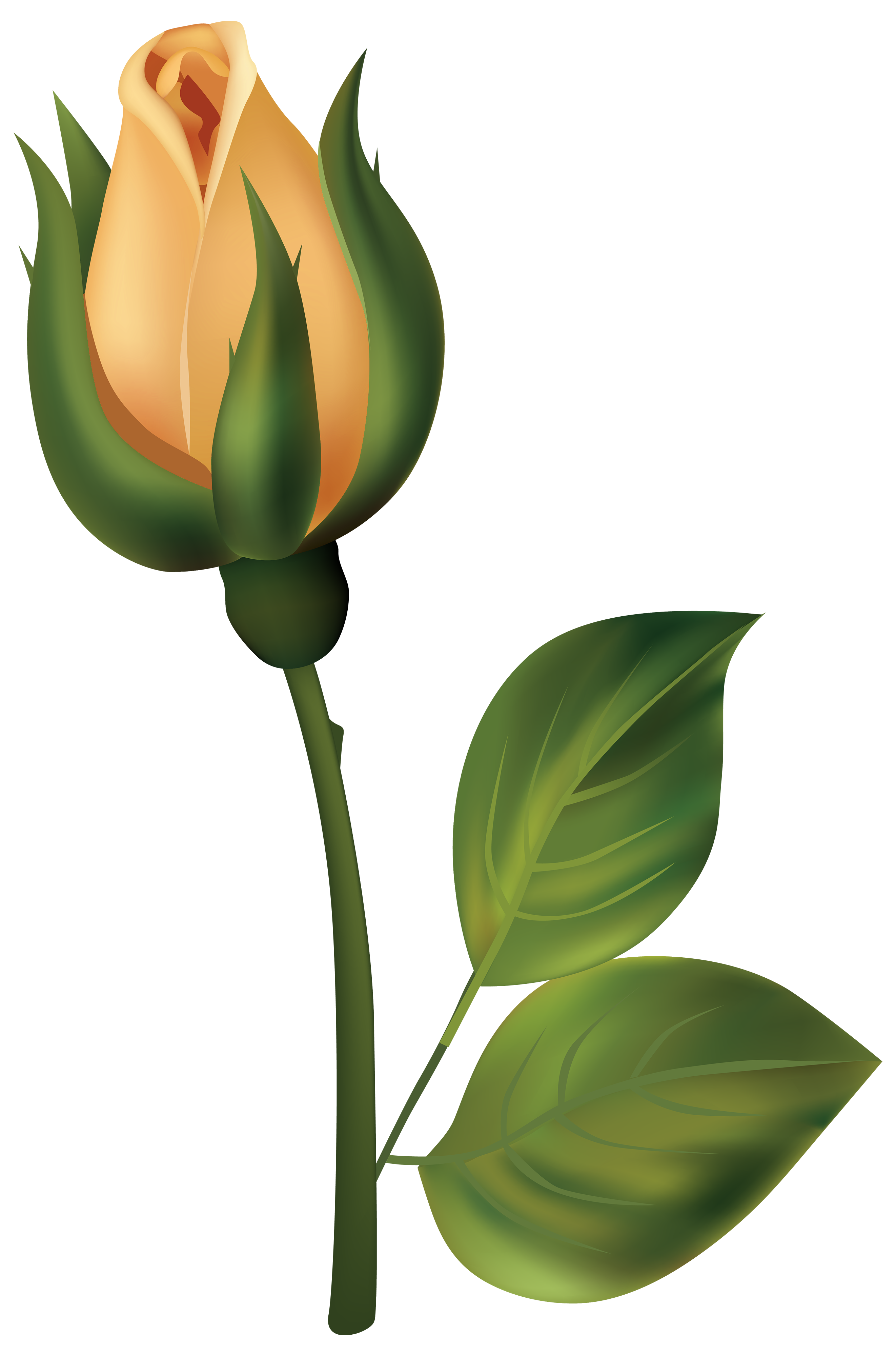 Flower bud png. Yellow rose clipart best