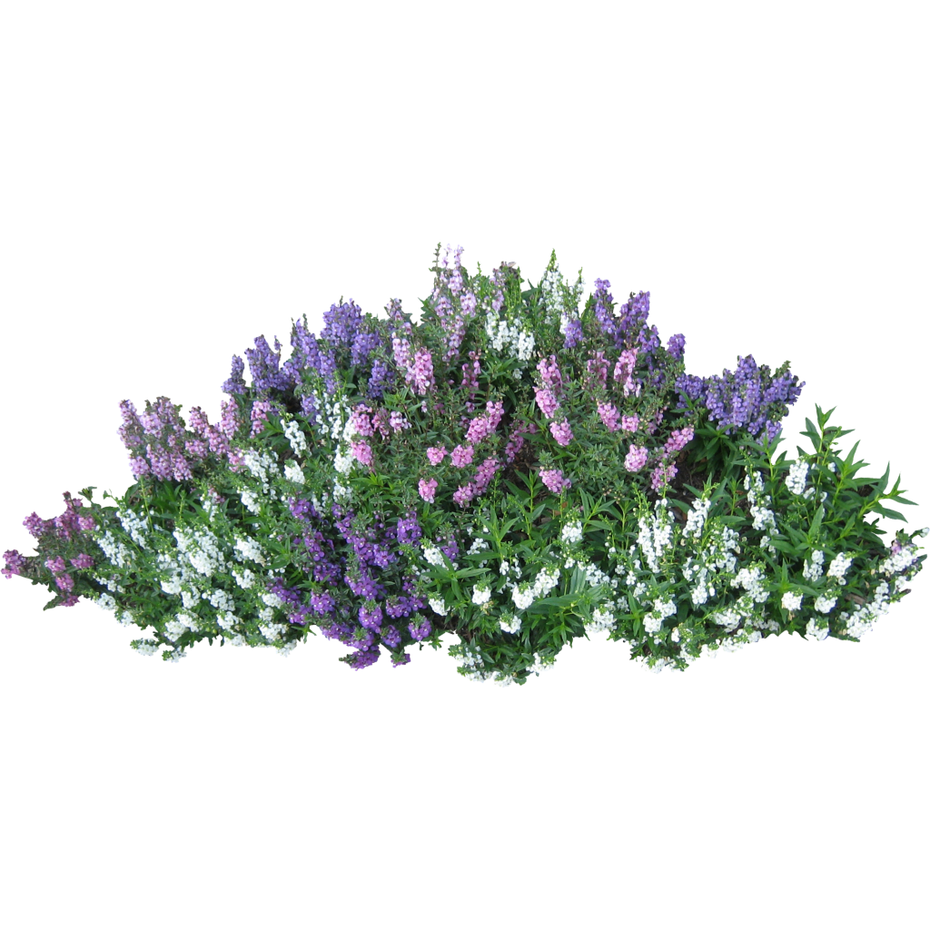 bushes top view png