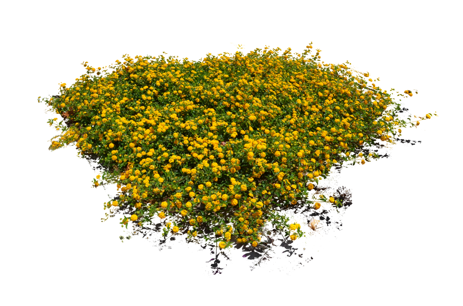 Bush plant png. Free plants flowers