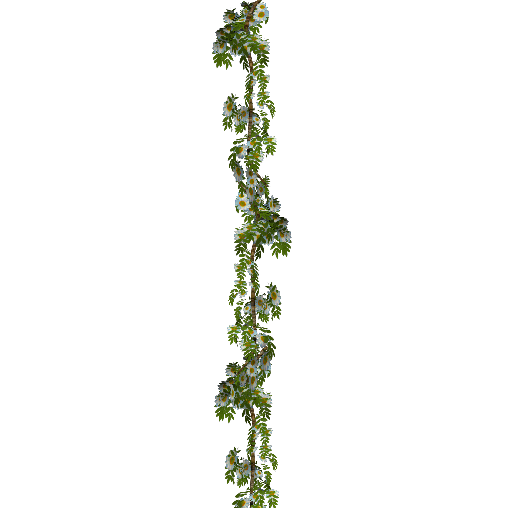 Flower chain png. Index of plants oct