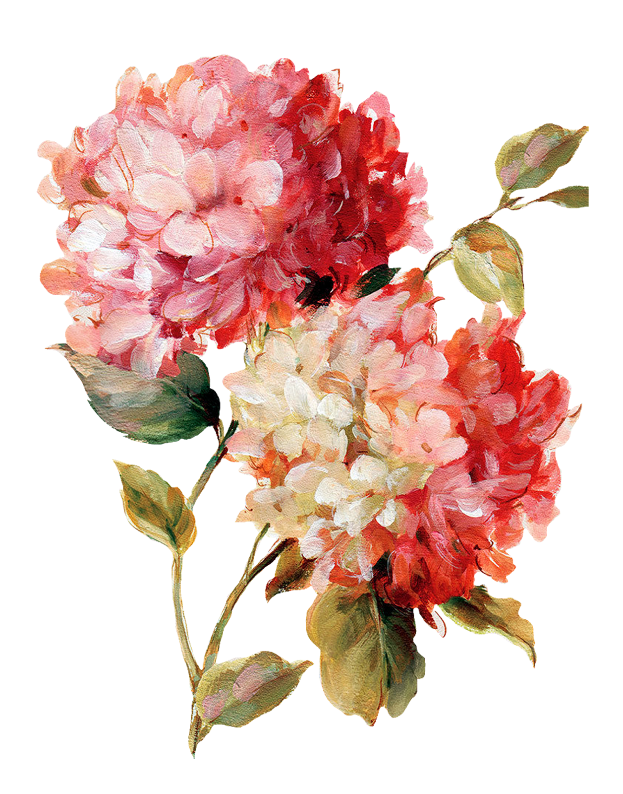 Painted flowers png. Decoupage flower painting pattern