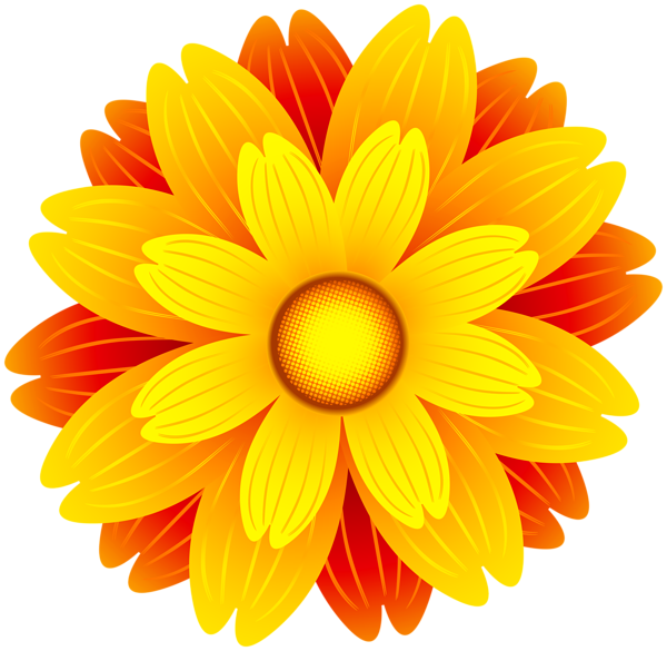 Orange flowers png. Flower transparent clip art