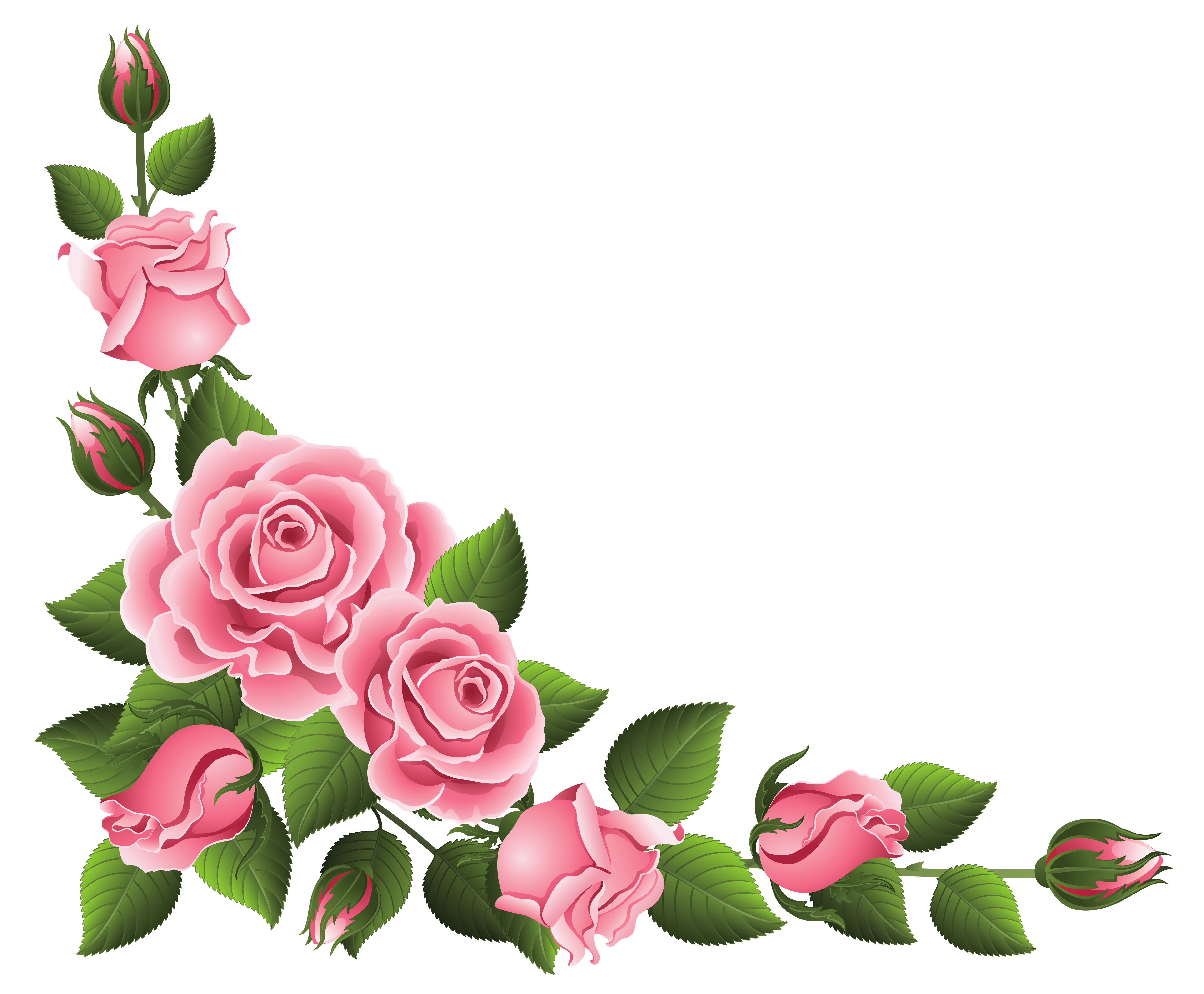 Flower corner border png. Decoration with roses clipart