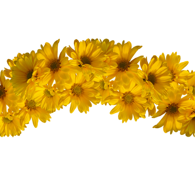 Yellow beautiful counter peak. Flower crown png transparent svg black and white download