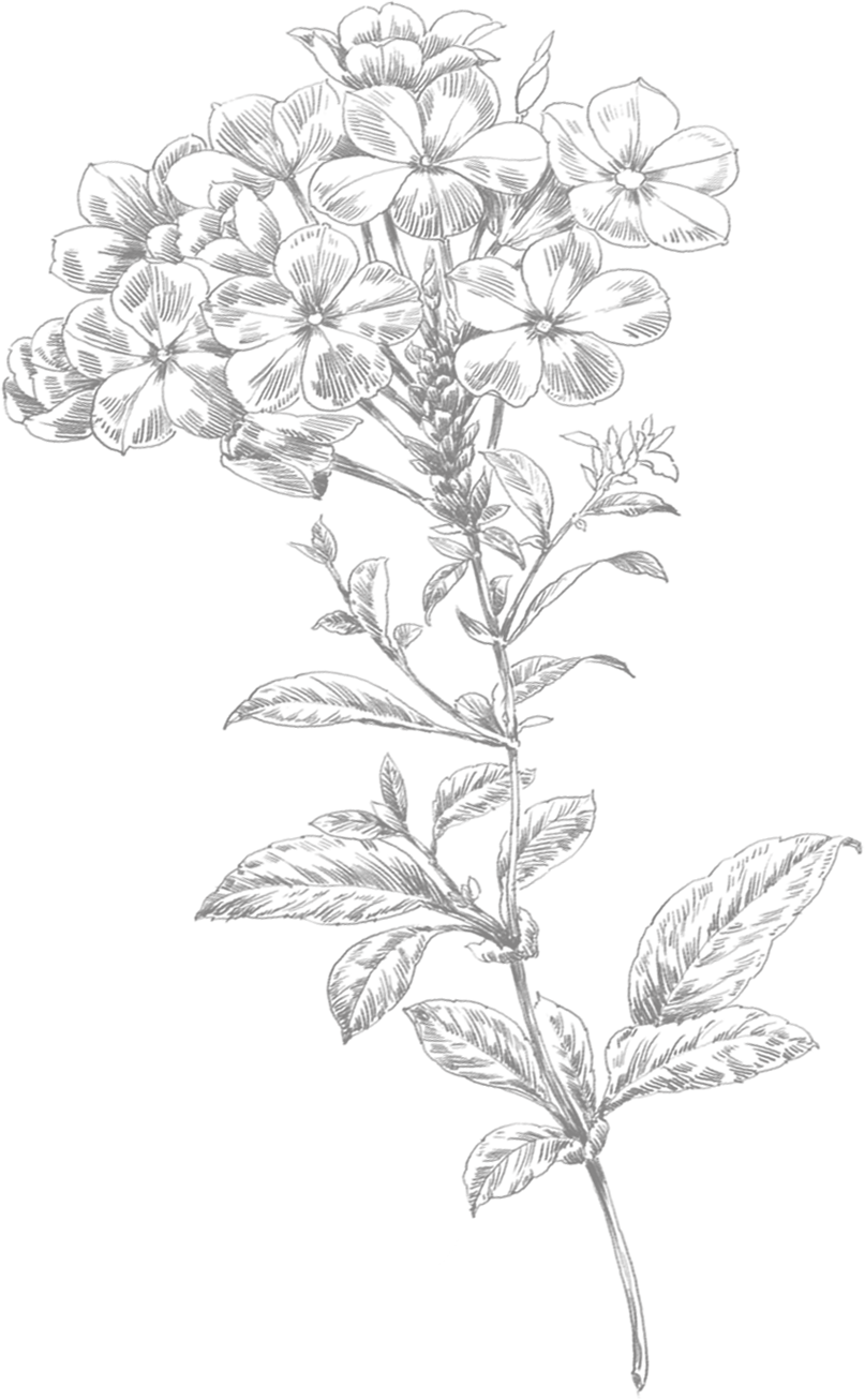 Flower drawing png. Line art small flowers