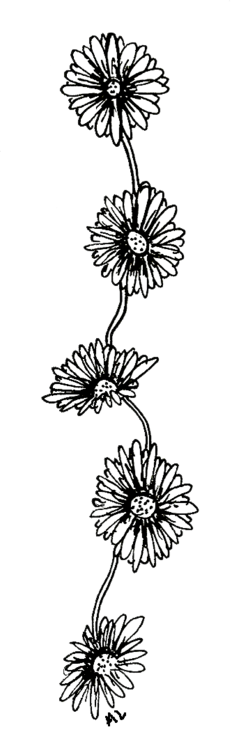 Flower drawing png tumblr. Back to tea rs