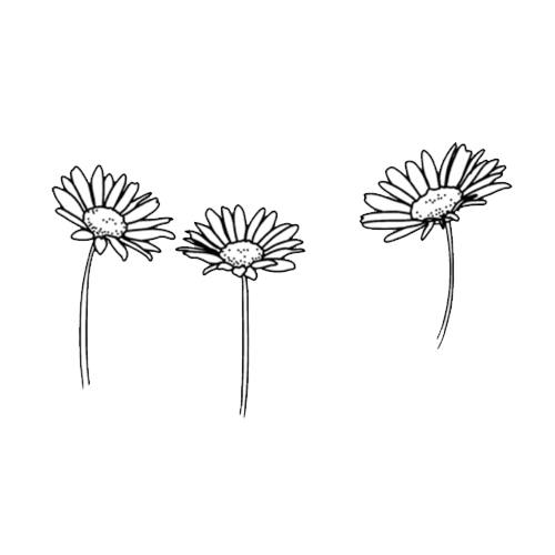 Flower drawing png tumblr. Overlays overlaays pinterest doodles