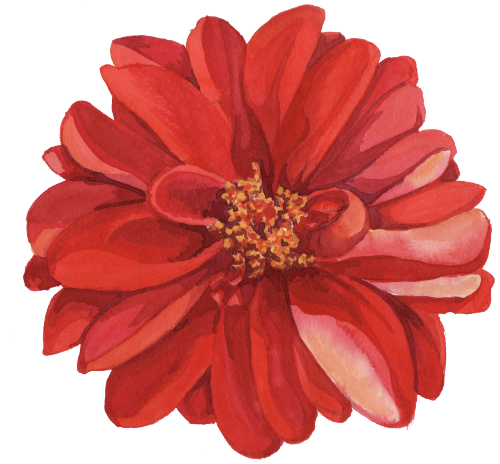 Flower drawing png tumblr. Collection of transparent