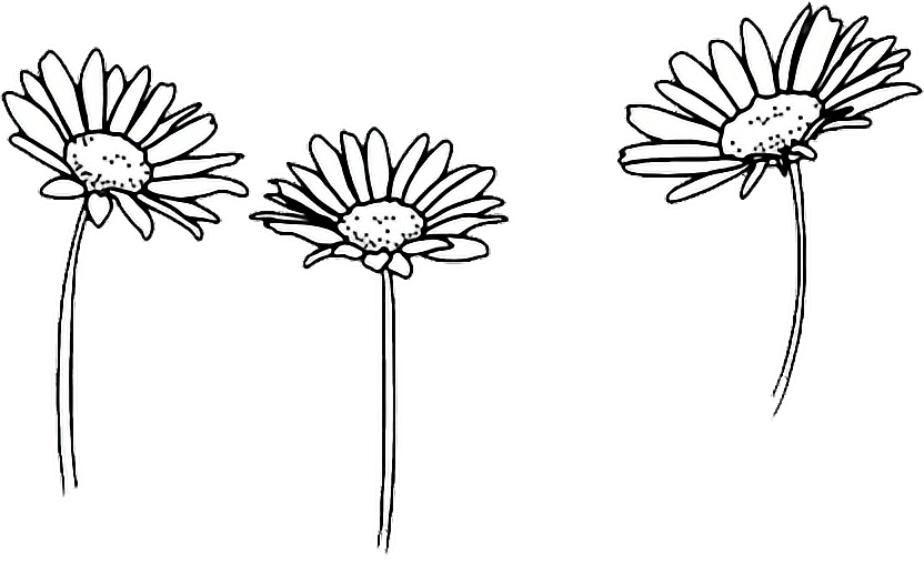 Flower drawing png tumblr. Outline sunflowers report abuse